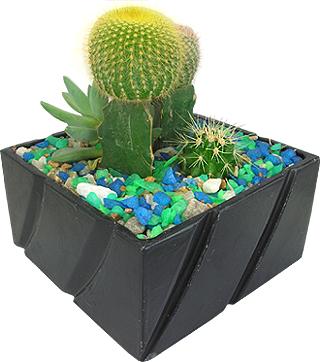 Arranjos com Cactos - mini cactos - Flores e presentes finos