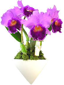 Orquídea - INFINITO PARTICULAR - Arrasador. Orquídea Cattleya lilás plantada, que acompanha fina base de cerâmica branca adornada com musgo : Infinito Particular.