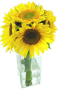 Flores e presentes - Girassol