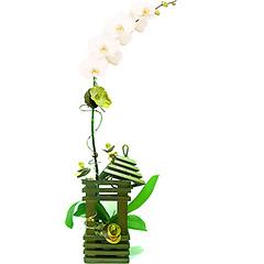 Impressionante! Uma linda orquídea phalaenopsis branca em uma luminária de madeira. Folhas secas com leve aroma e alfinetes decorativos completam o presente, conferindo-lhe um toque super especial.