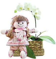 Linda orquidea phalaenopsis branca acompanhada de uma graciosa boneca de pano em tons suaves de cor de rosa!