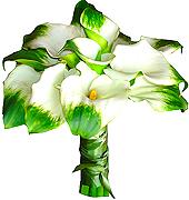 Um lindo bouquet estilo redondo, confeccionado com callas verdes e acabamento em cetim.