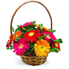 Tradicional cesta de flores com coloridas e alegres gérberas.
