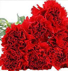 Dez hastes de cravos vermelhos para você montar seu próprio arranjo ou bouquet ou decorar sua casa ou seu ambiente de trabalho. OBS - Flores não embaladas para presente.