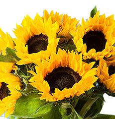 Seis hastes de girassóis  para você montar seu próprio arranjo ou bouquet ou decorar sua casa ou seu ambiente de trabalho. OBS - Flores não embaladas para presente.
