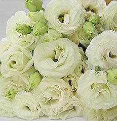 Dez hastes de lisianthus para você montar seu próprio arranjo ou bouquet ou decorar sua casa ou seu ambiente de trabalho. OBS - Flores não embaladas para presente.