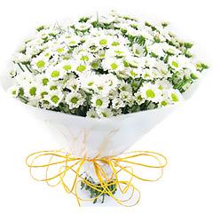 Delicadíssimo bouquet de mini margaridas.