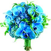 Fascinante degradê das cores azuis e verde. Bouquet de Noiva com orquídeas e brotos de hortências