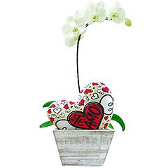 """Linda orquídea phalaenopsis plantada acompanhada de um coração com os dizeres """"Te amo"""""""