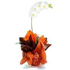 Magnífica orquídea phalaenopsis branca plantada, adornada com papéis, telas e cordões em tons terrosos.