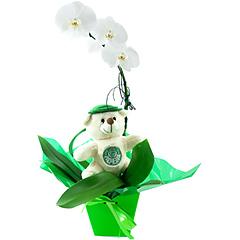 Uma linda orquídea phalaenopsis branca toda decorada em tons de verde e banco e com ursinho palmeirense exclusivo.