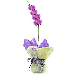 Maravilhosa orquídea lilás plantada envolta em tela e pepeis.