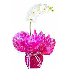 Linda orquídea phalaenopsis branca plantada com acabamento em tela e papéis em tons de pink.
