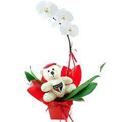 Uma linda orquídea phalaenopsis branca toda decorada em tons de vermelho e branco e com ursinho são paulino exclusivo.