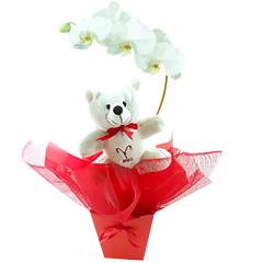 Um lindo exemplar de orquídea phalaenopsis branca embalada com as cores do signo de ÁRIES (vermelho) e com um simpático e exclusivo ursinho ariano.