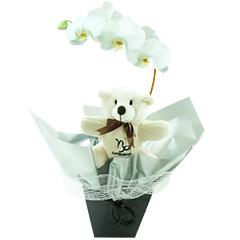 Um lindo exemplar de orquídea phalaenopsis branca embalada com as cores do signo de CAPRICÓRNIO (preto/chumbo) e com um simpático e exclusivo ursinho capricorniano.