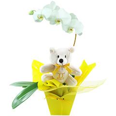 Um lindo exemplar de orquídea phalaenopsis branca embalada com as cores do signo de GÊMEOS (amarelo) e com um simpático e exclusivo ursinho geminiano.