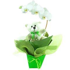 Um lindo exemplar de orquídea phalaenopsis branca embalada com as cores do signo de PEIXES (verde claro) e com um simpático e exclusivo ursinho pisciano.