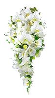 Maravilhoso bouquet estilo cascata confeccionado com orqúidea phalaenopsis branca.