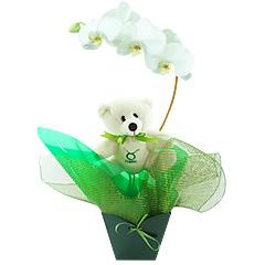Um lindo exemplar de orquídea phalaenopsis branca embalada com as cores do signo de TOURO (verde escuro) e com um simpático e exclusivo ursinho taurino.