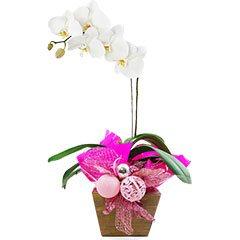 Orquídea Natalina