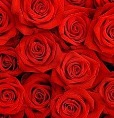 Dez hastes de rosas nacionais vermelhas para você montar seu próprio arranjo ou bouquet ou decorar sua casa ou seu ambiente de trabalho. OBS - Flores não embaladas para presente.